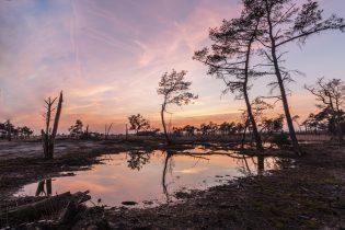 Corry Moerenhout-Jogchems